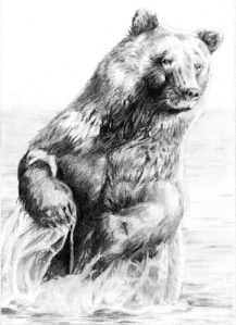 BearUnderDrawing